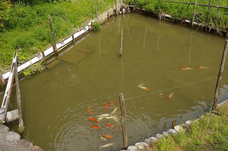 手づくりの池